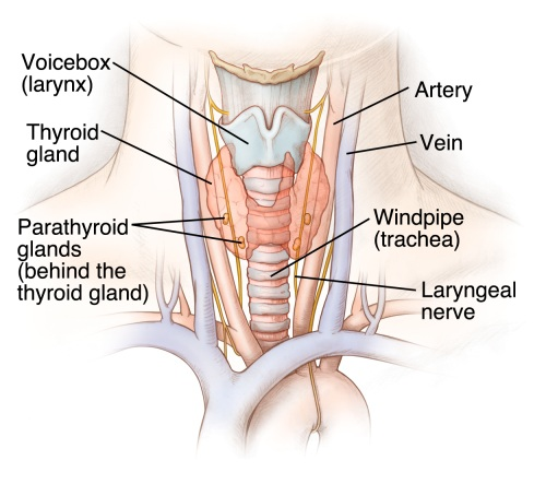 Dr Thind\'s Homeopathy: SIGNS THAT INDICATE YOUR THYROID ISN\'T ...