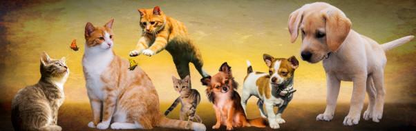 Homeopathic Veterinary